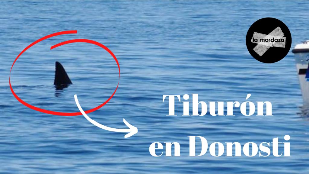 tiburón en donosti